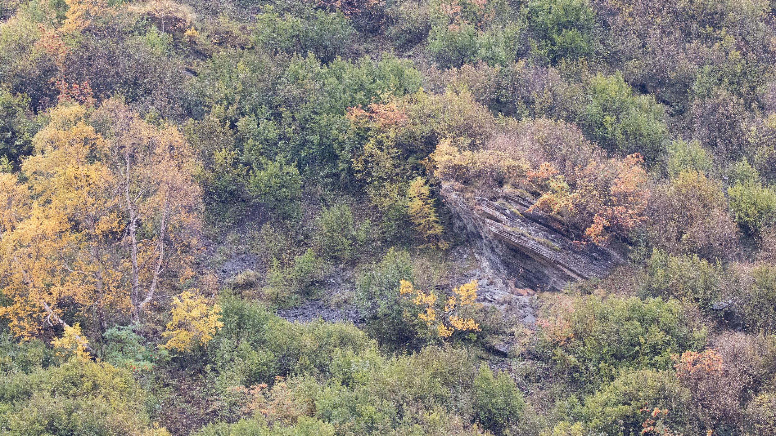 red-deer-fall-photography-salva-fauna