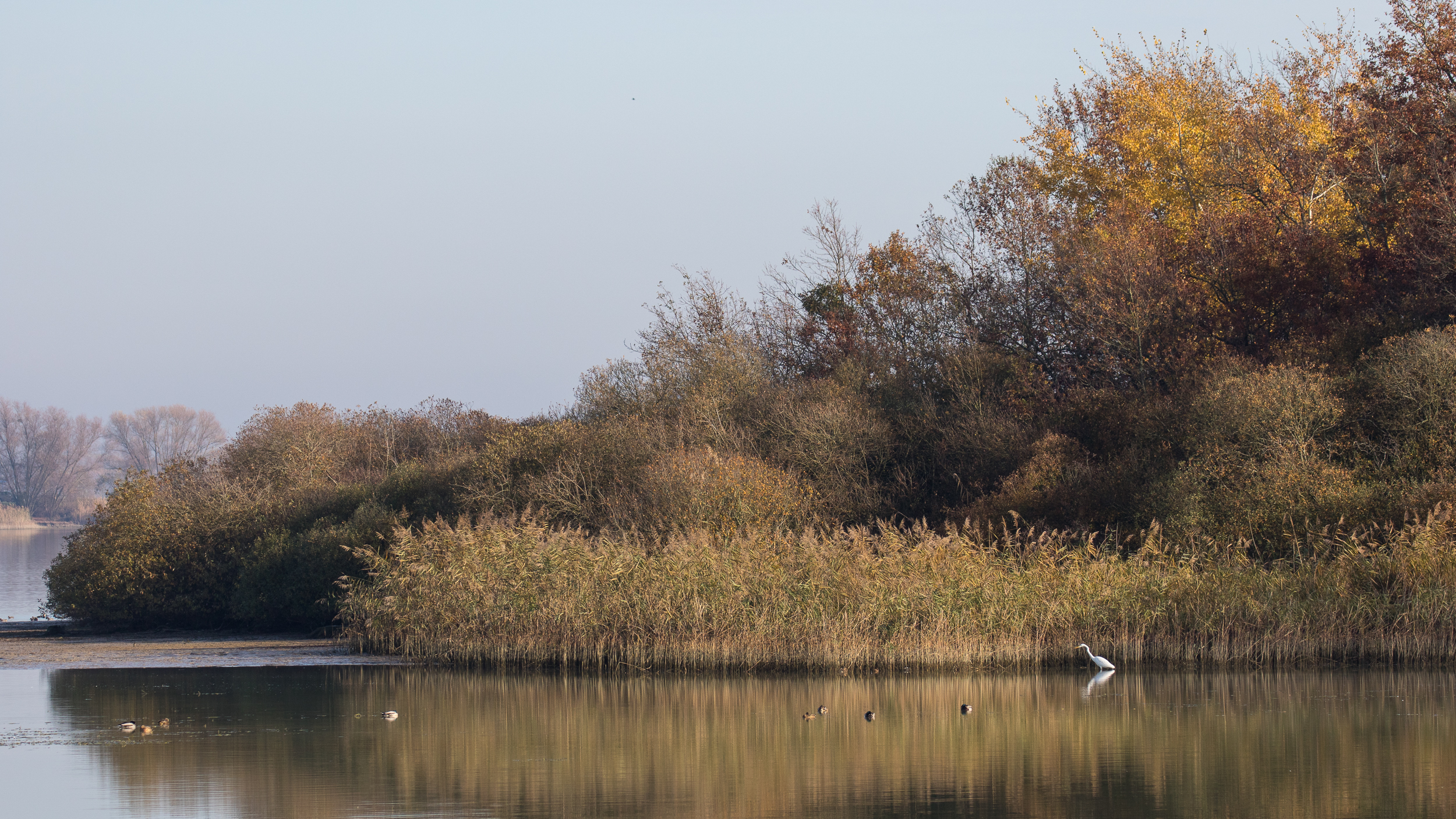 birding-lake-der-chantecoq-france
