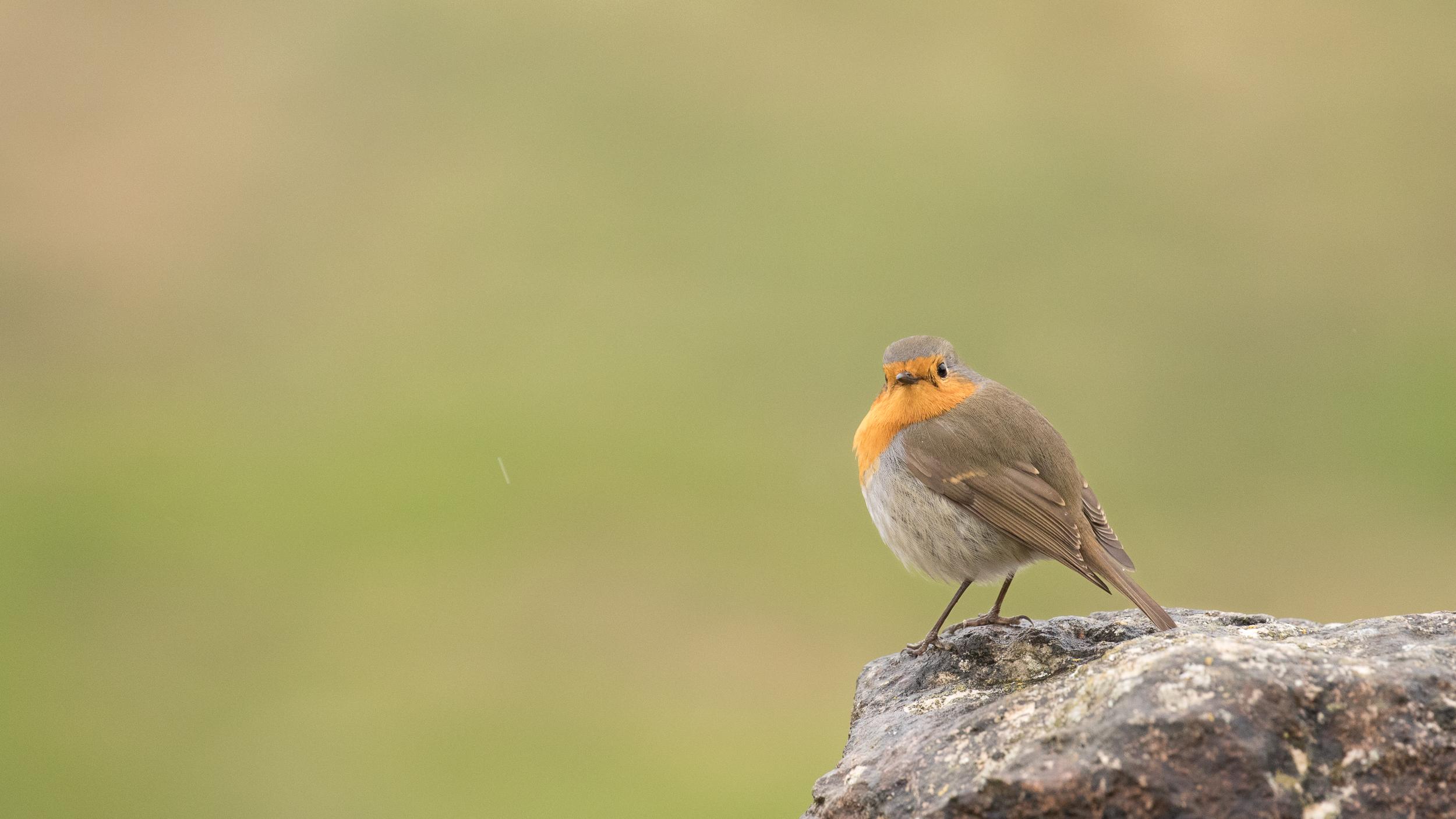 birding-lake-der
