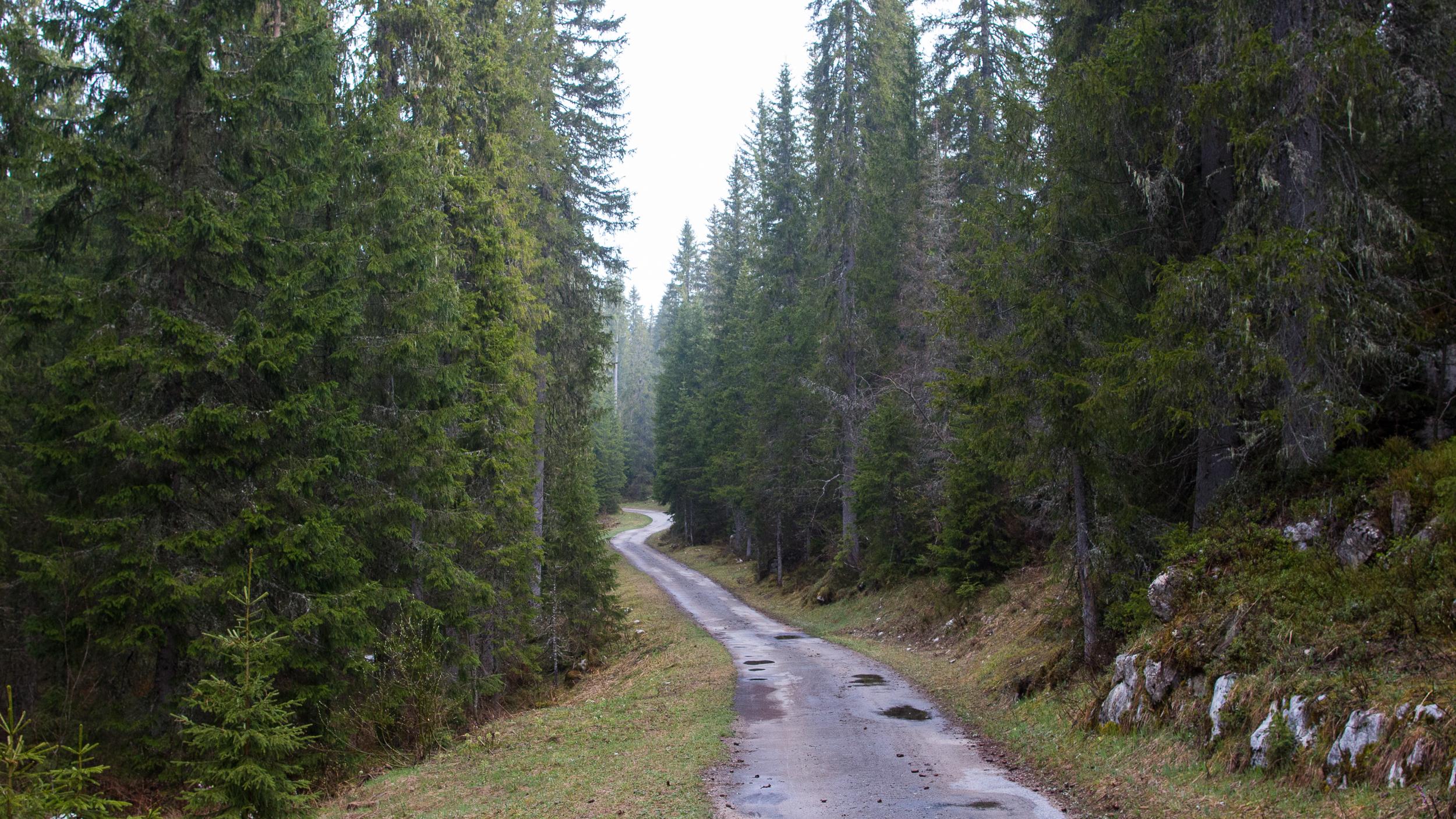 forêt-jura-france