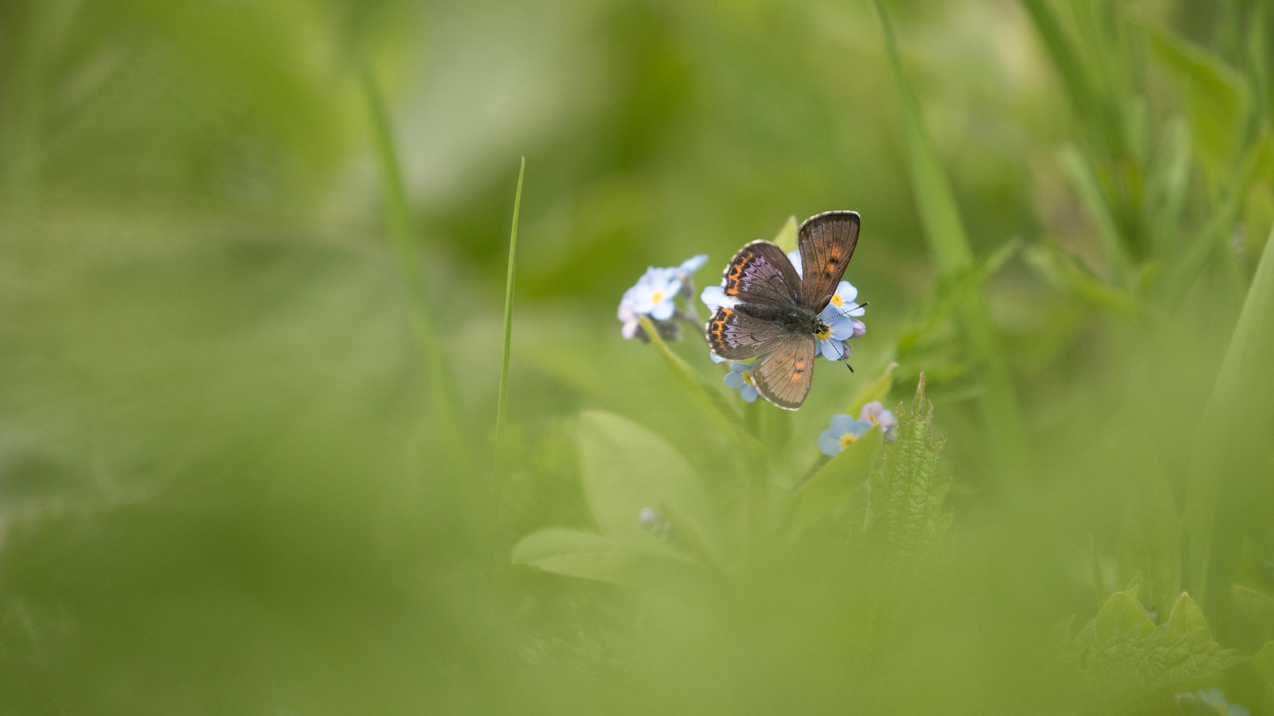 papillon-jura-france