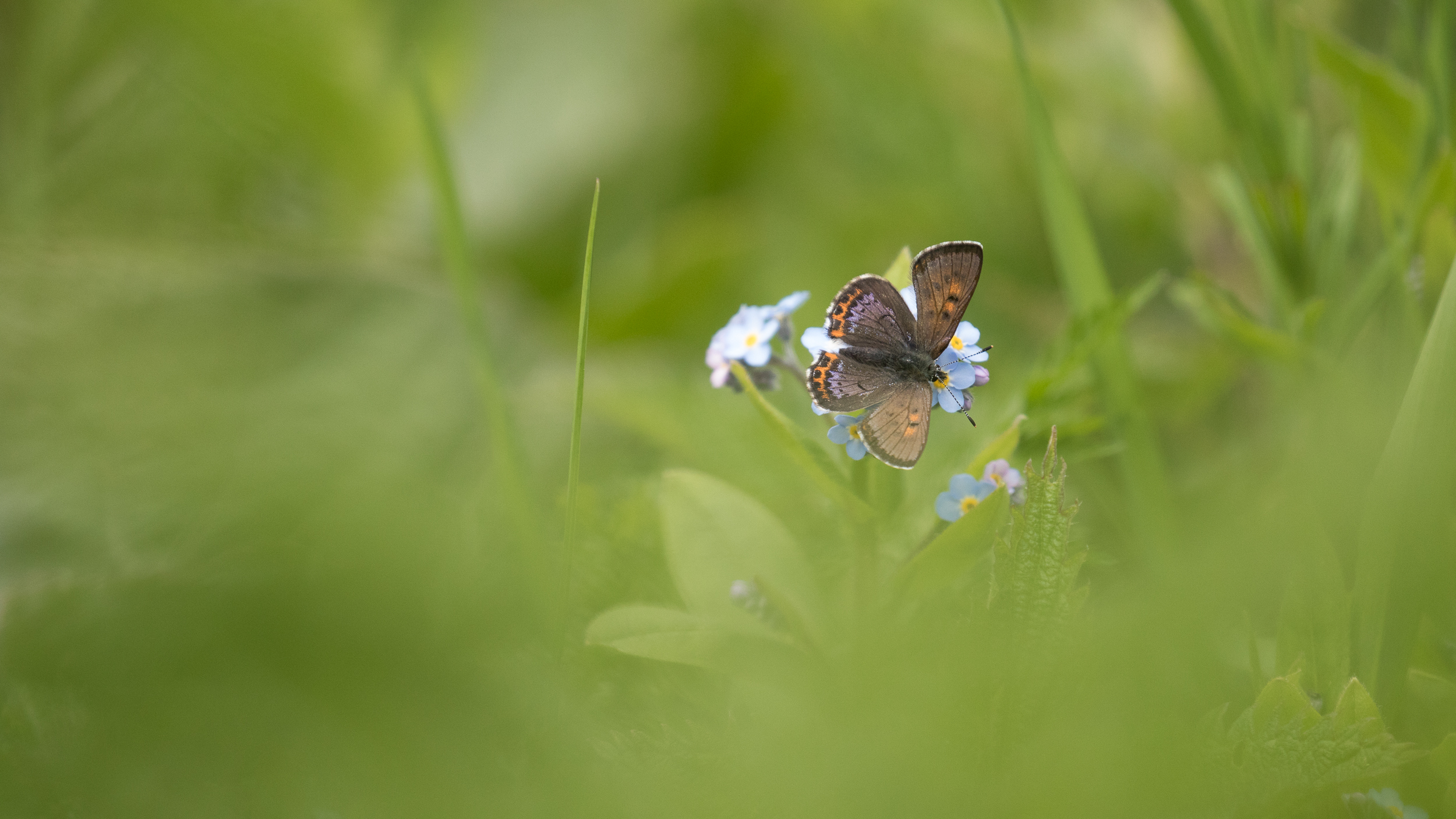 butterfly-jura-france