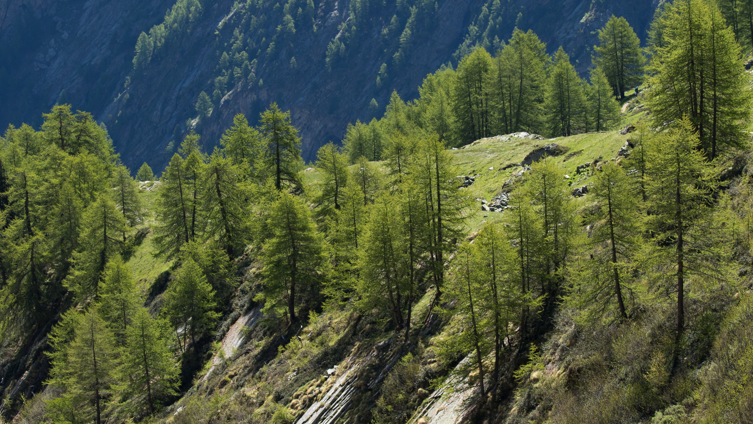 parc-national-grand-paradis-italie
