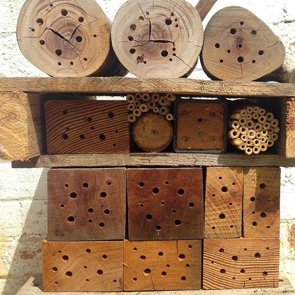 Another bee hotel added