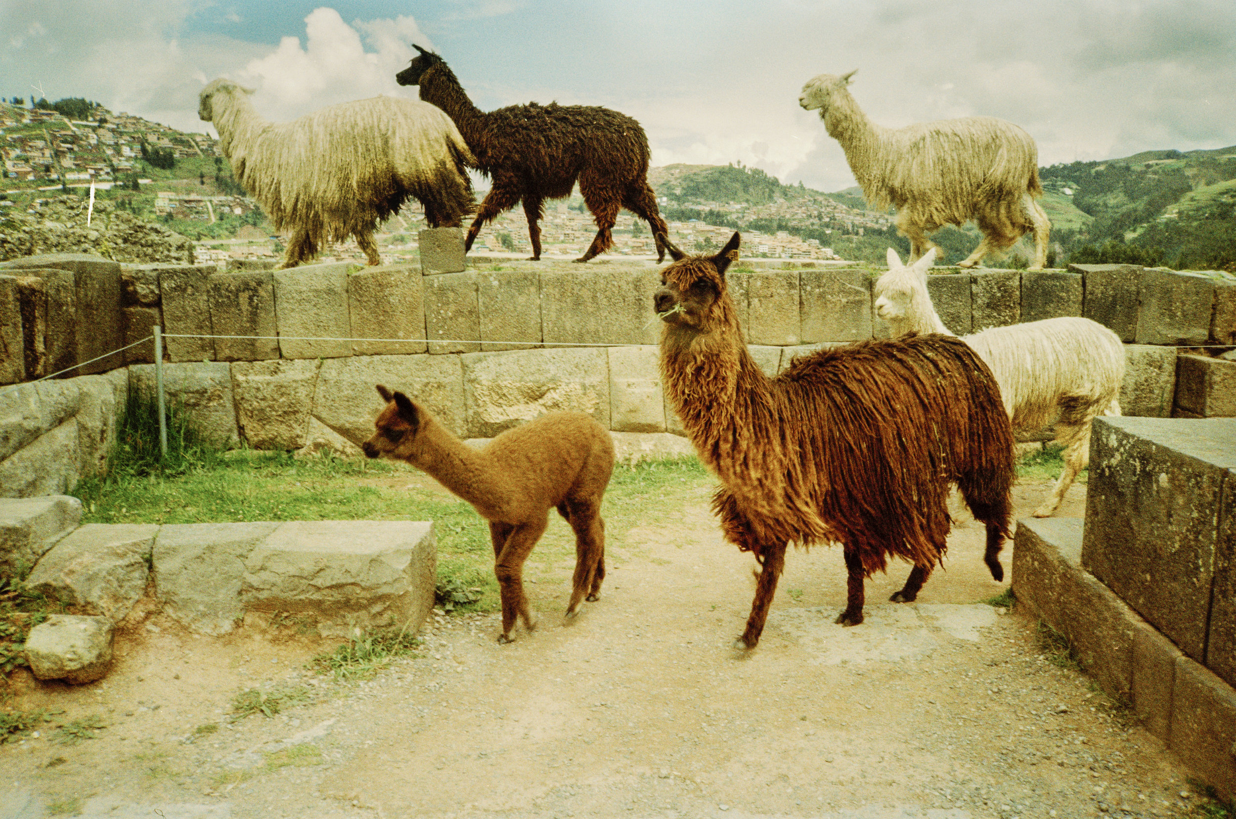 Cuzco73 (Kopie).jpg