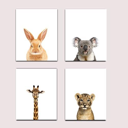 Baby Animal Portraits