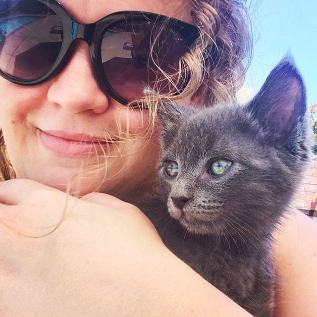 I'm in baby kitty heaven! 😍 #bliss #ittybitty #kitty #cat #cuddles #thoseeyes #iridescent #petsofinstagram #shadow #flirtwithflavor #curls #curlyhair #denver #colorado #funinthesun #summer #2019