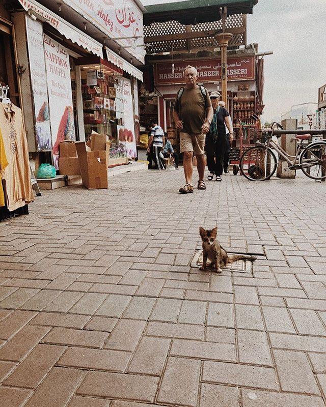 This little guy stole my heart. He was so small and fragile. . . . . . . . . #mm #travel #uae #photography #abudhabi #streetphotography #filmphoto #photooftheday #vsco #analogphotography #thefilmcommunity #vscocam #traveldiaries #nationalgeographic #natgeo #travelblog #photo #snapshot #art #filmfeed #photographer #oldsouk #cat #analoguevibes #street #pics #dubai #analogue #35mm
