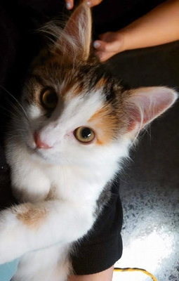 We're experts in the treatment of cats and know how to make them comfortable during treatment.