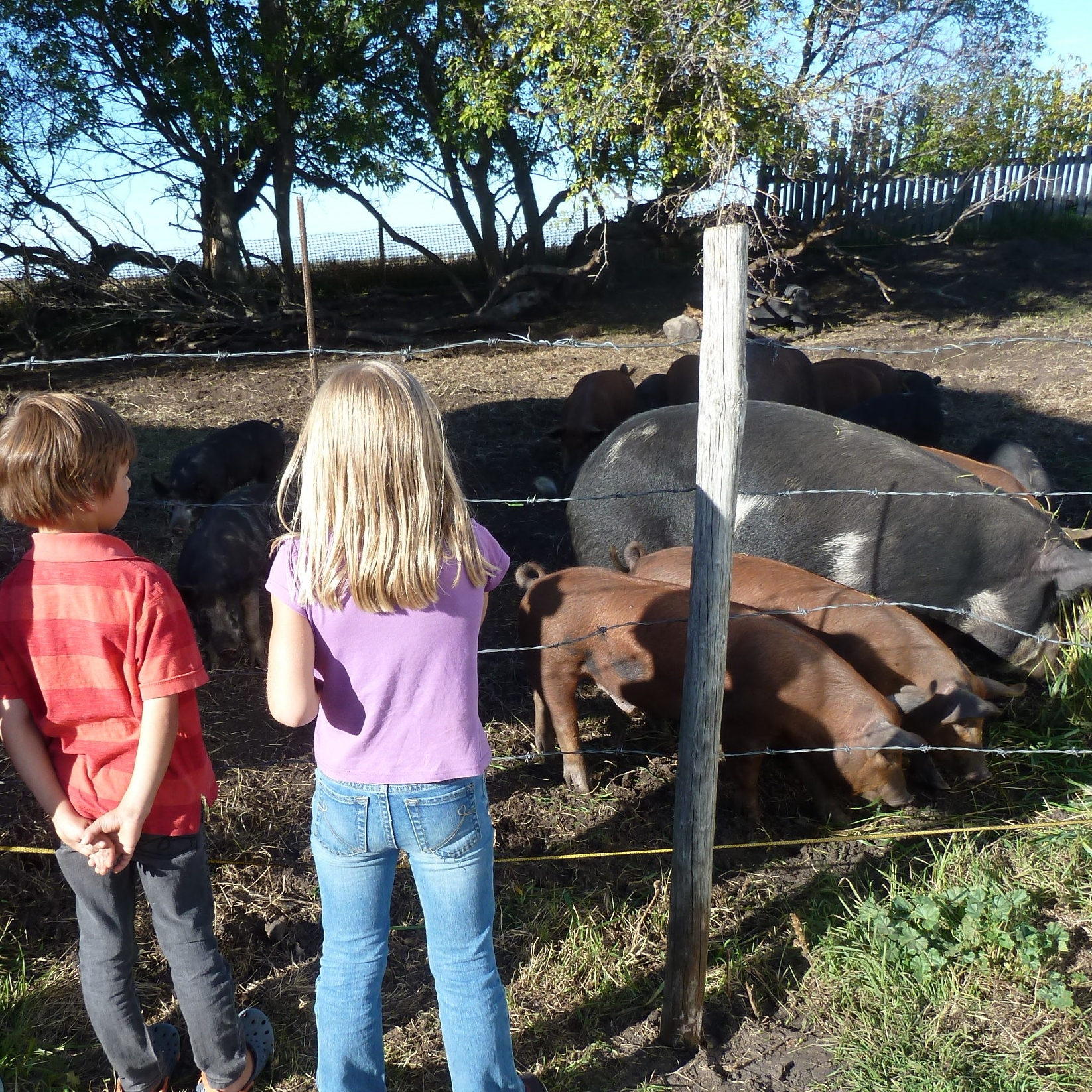 Bring your learning outside to the farm - .