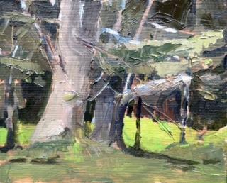 White Pines   6 x 8, oil on panel.