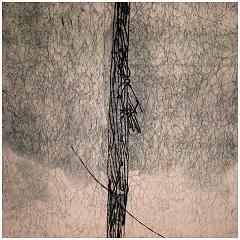 "Woodpecker's Song  Sugar-lift Aquatint, Soft ground Etching 18"" x 18"""