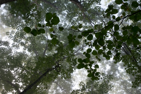 Canopy  11 x 15, fine art photography, archival inkjet print, limited editions.