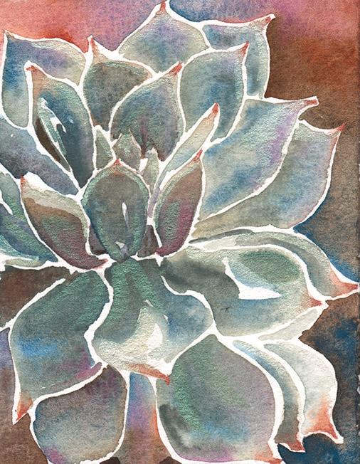 Succulent Color Study