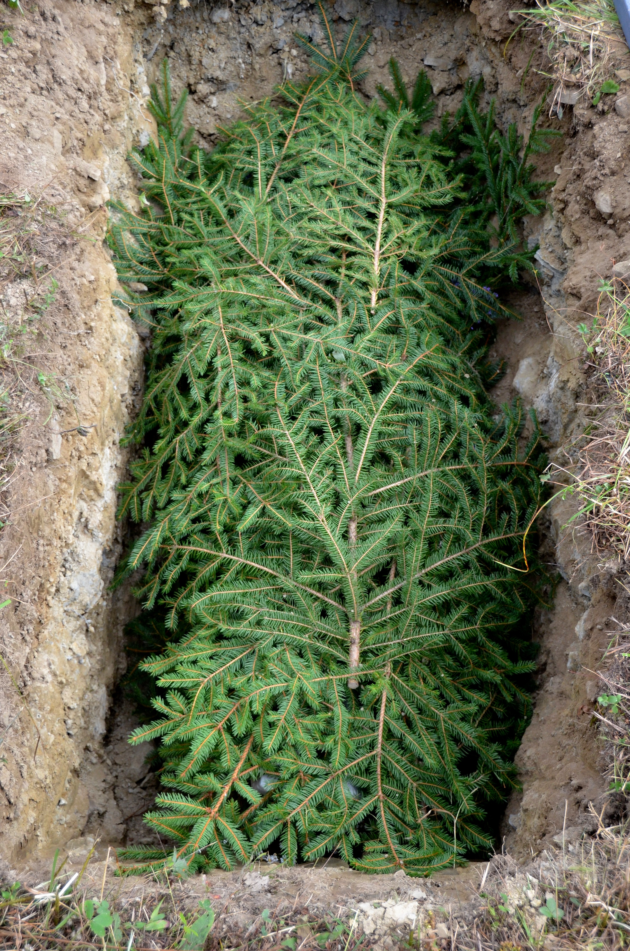 Evergreen boughs are often placed in the grave on top of the body prior to shoveling.