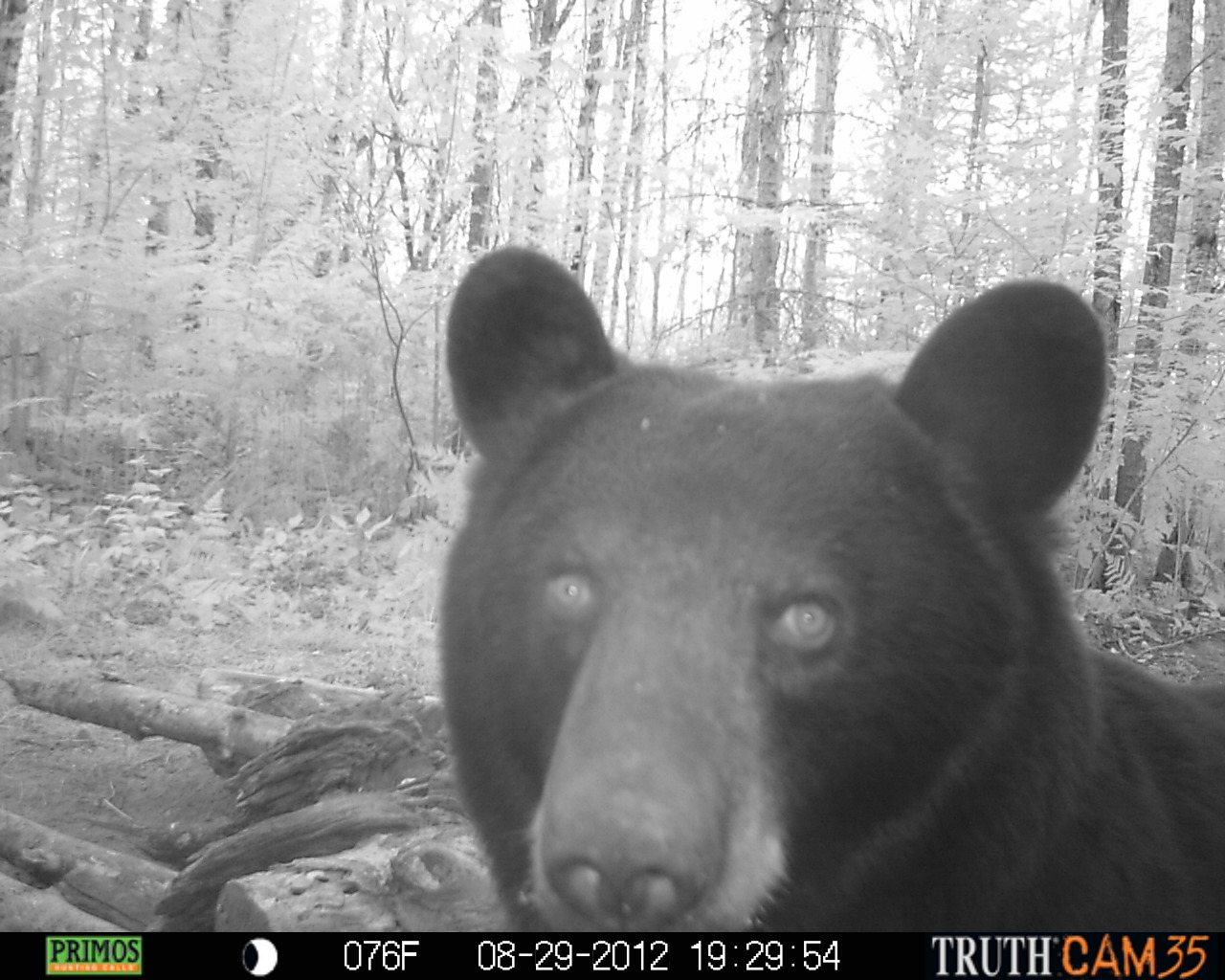 bear 34.JPG