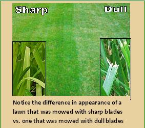 sharpVdull.jpg