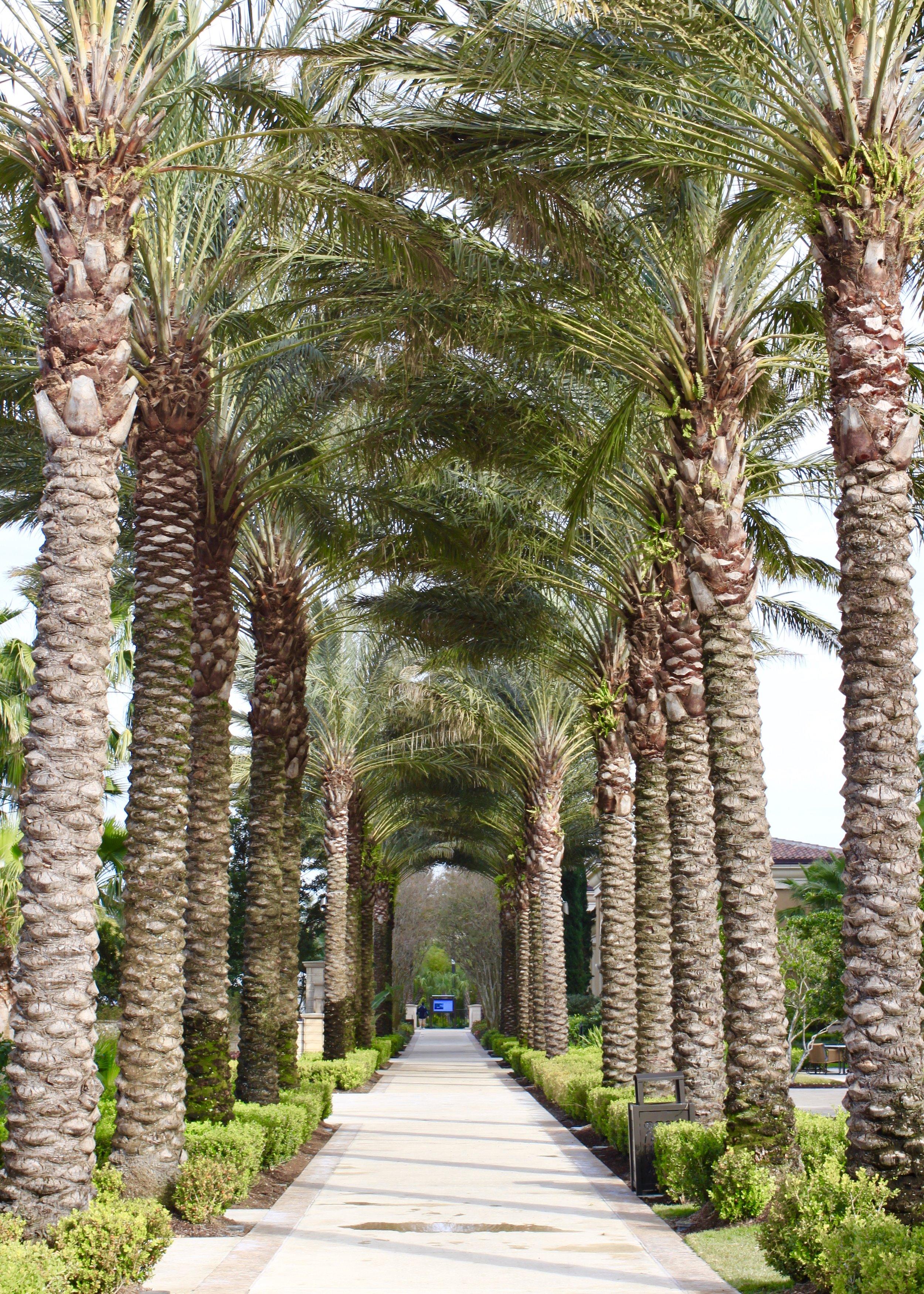 Instagram-worthy palm trees for days