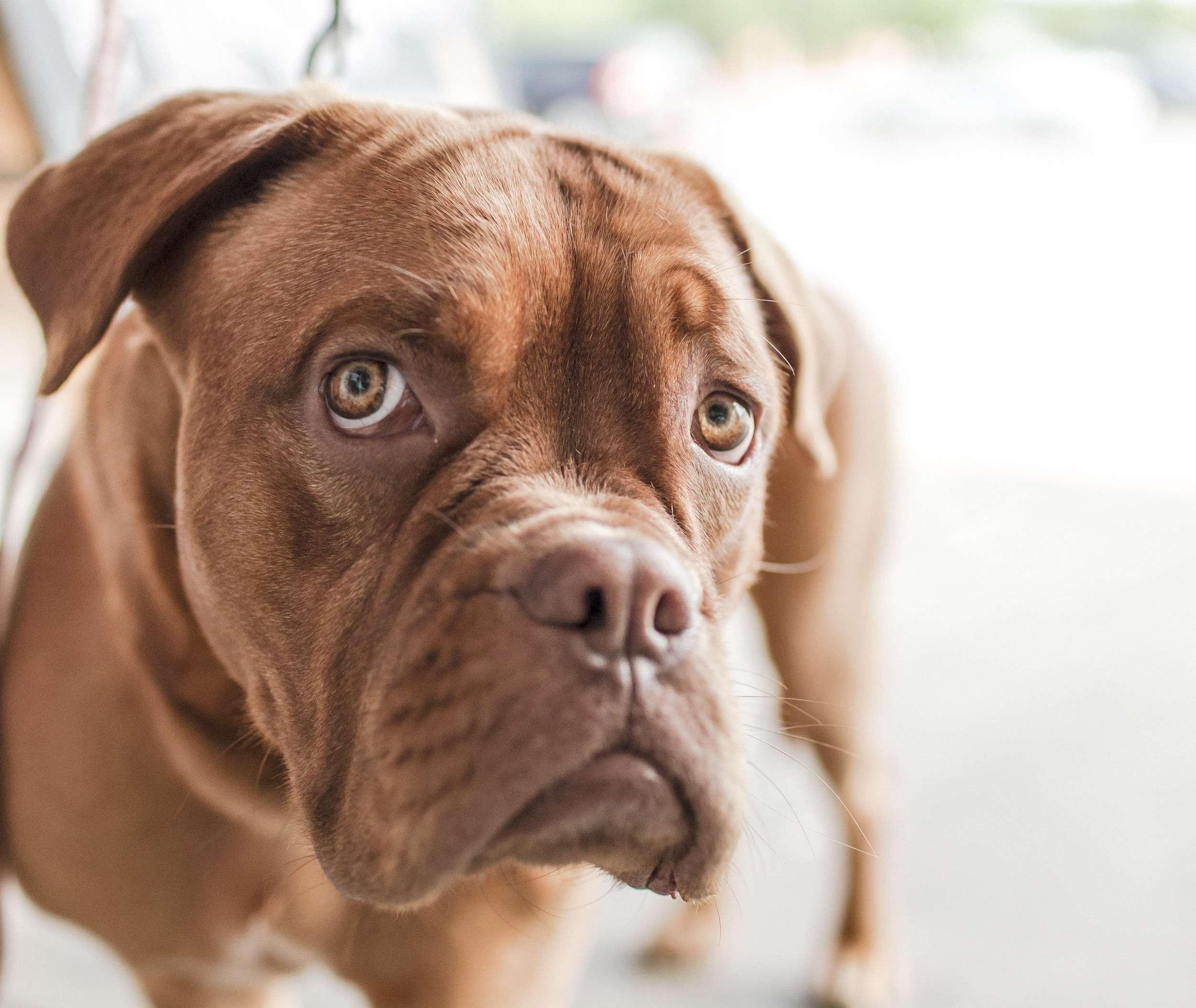 white coat syndrome - anxiety at vet