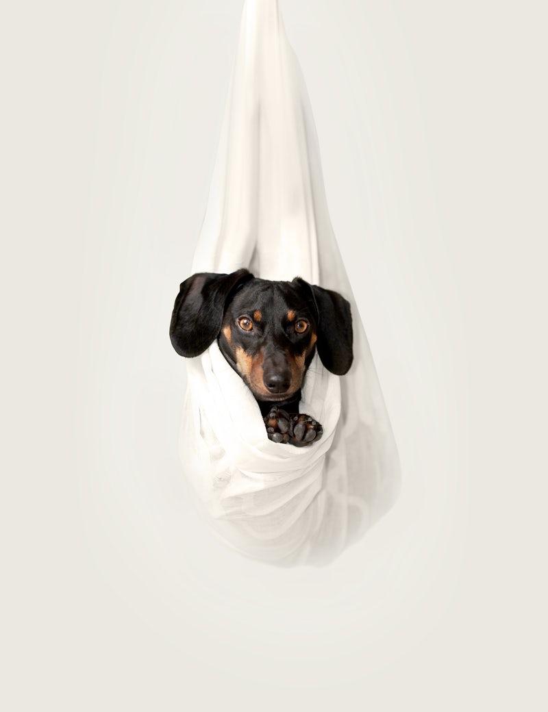 hangingdachshund.jpeg