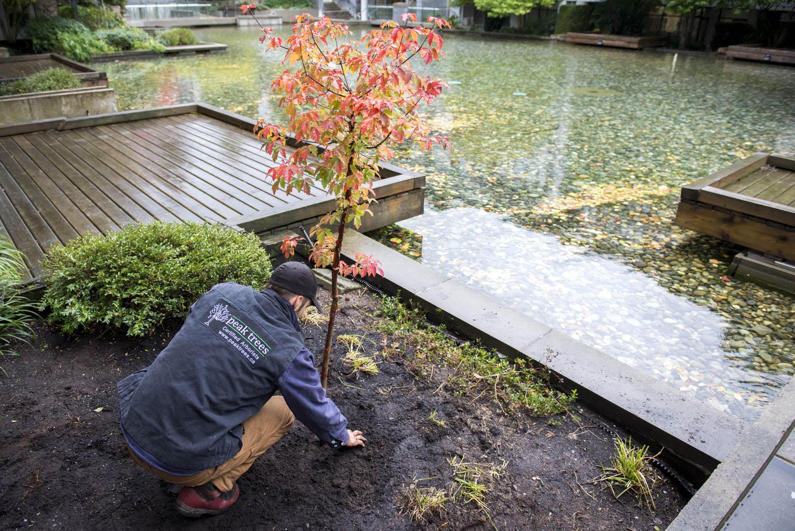 planting photo 3.jpg