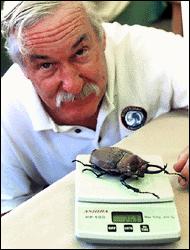 An excellent entomologist moustache