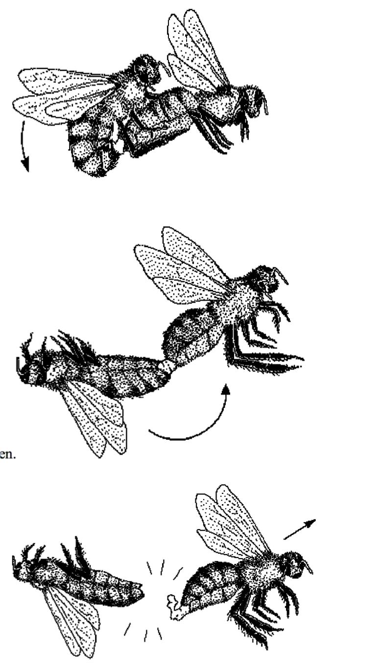 Bee sex somersault