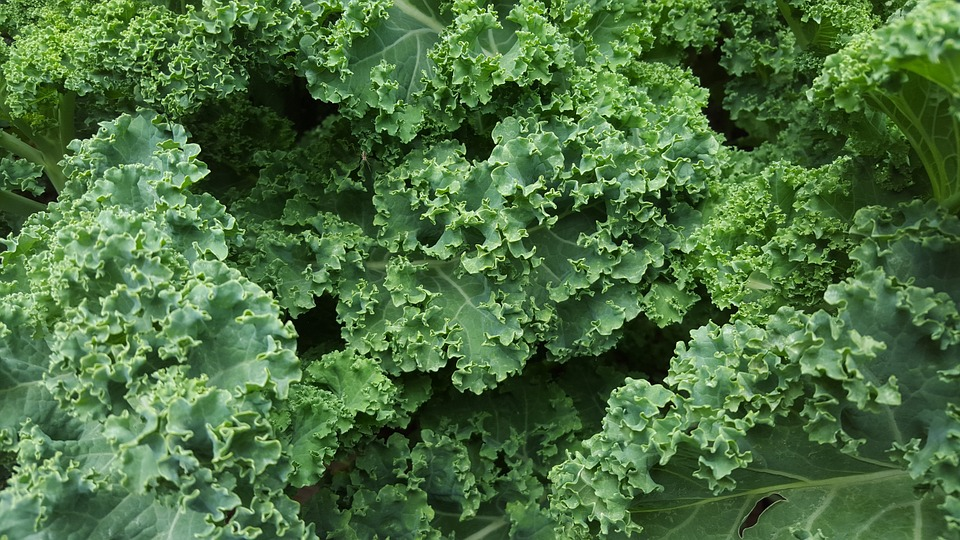 Kale - Mixed varieties with tangy, fiberous leaves. Pairs well with fall flavors like garlic, onions, apples, or squash. Great in soups, salads, or stir frys.