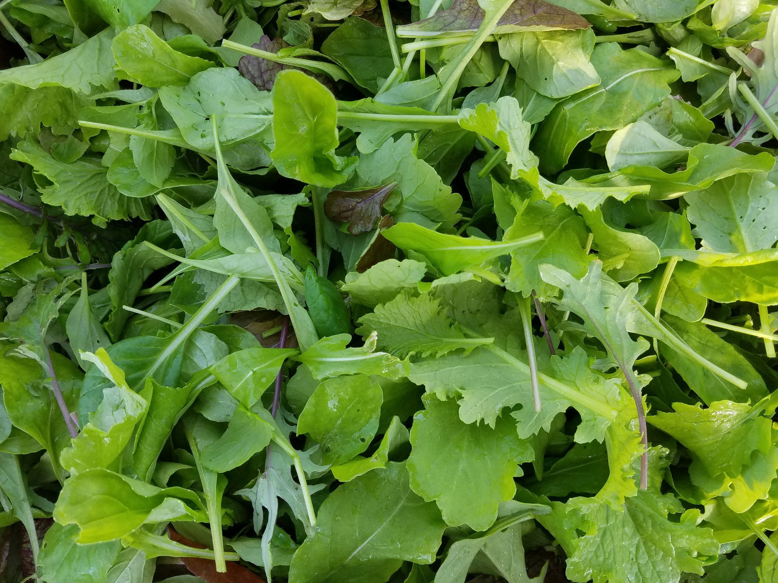 Mesclun mix - A spicy mix of baby lettuces, kale, and mustard greens. Flavorful salads and sandwich toppers.