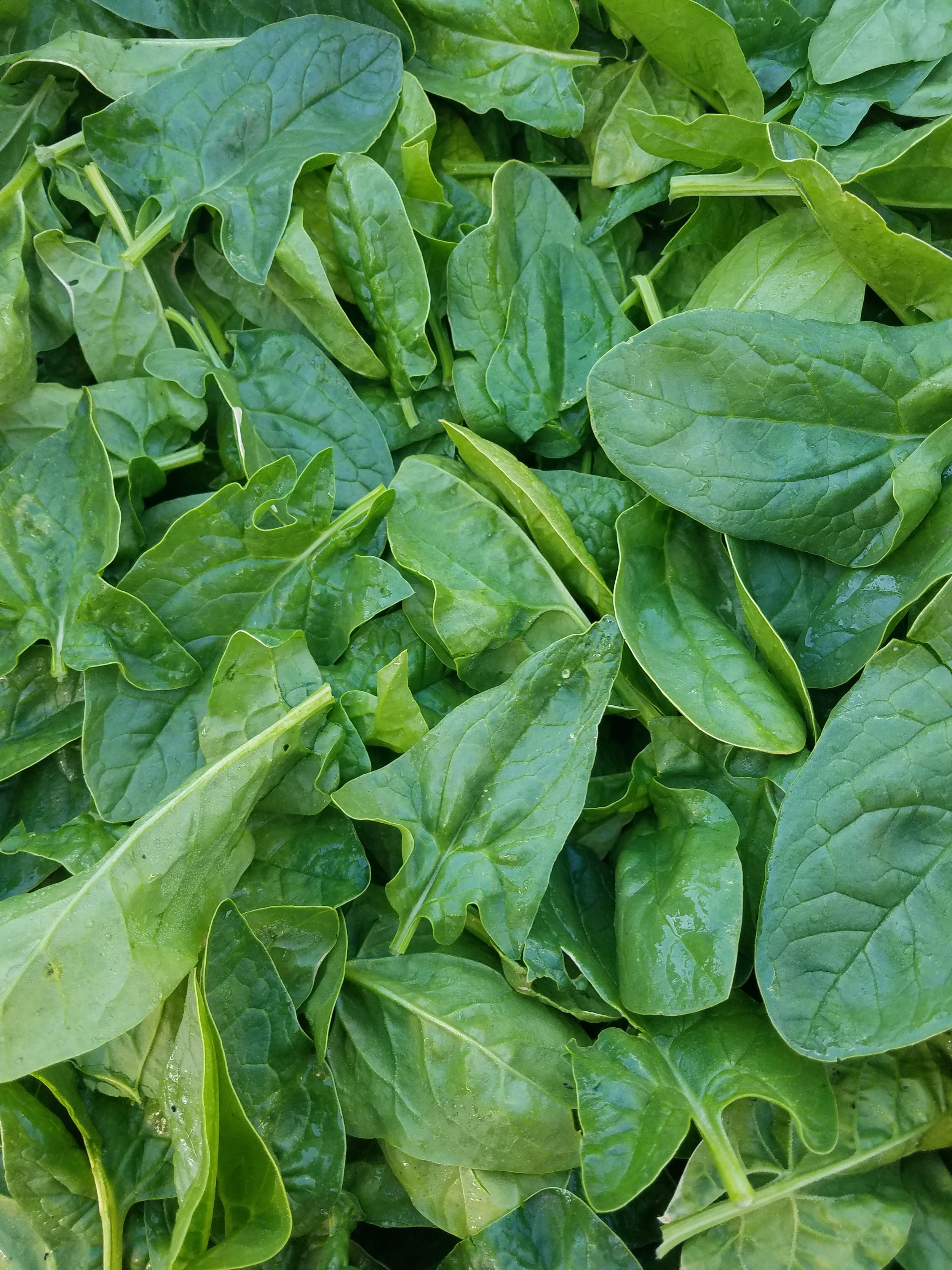 Spinach - A hearty salad green that is just as good cooked as it is raw. Packed with nutrients and an earthy flavor, it's a great addition to any meal.