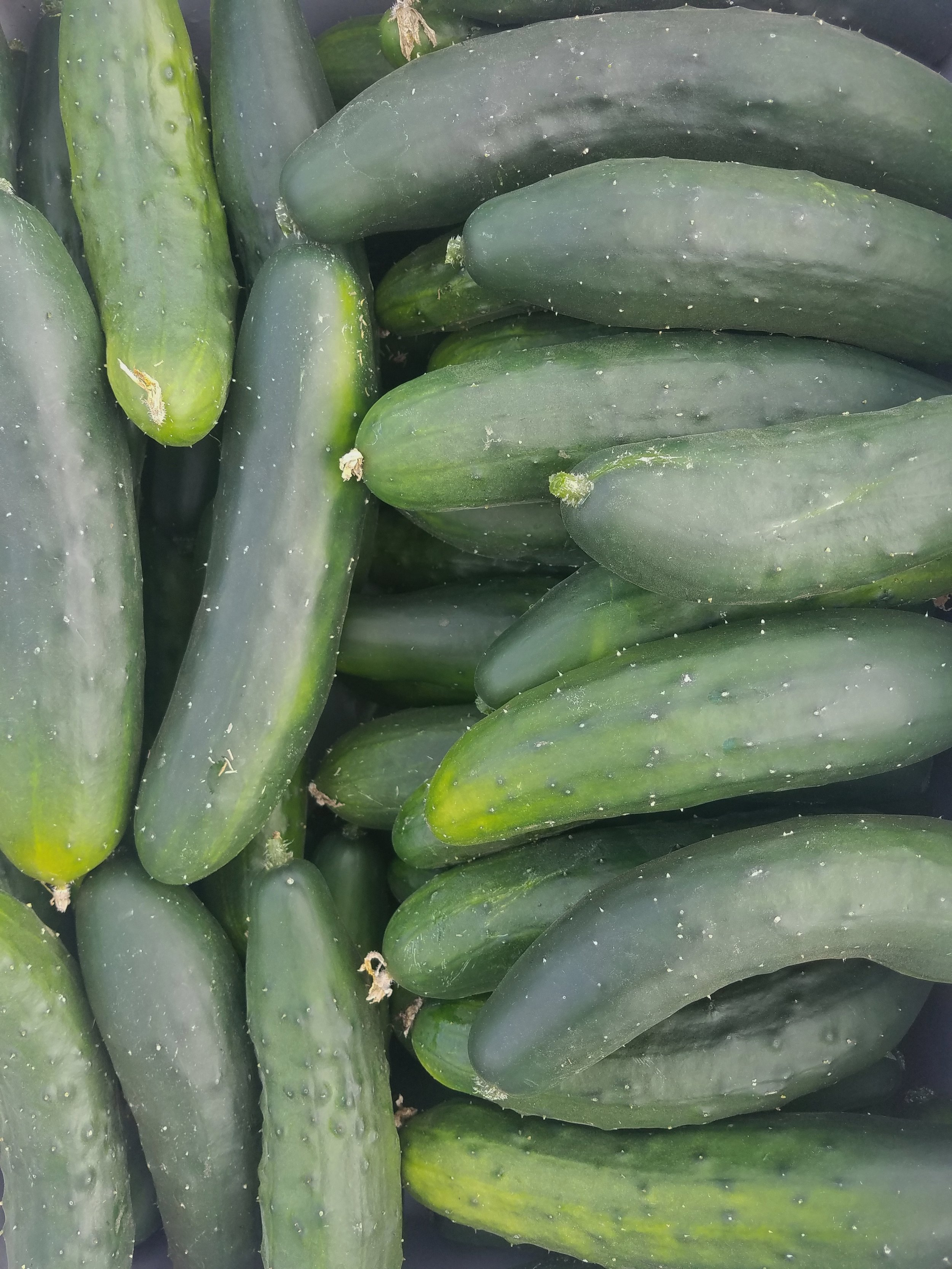 Cucumber - A classic variety. Perfect for salads, snacks, juicing