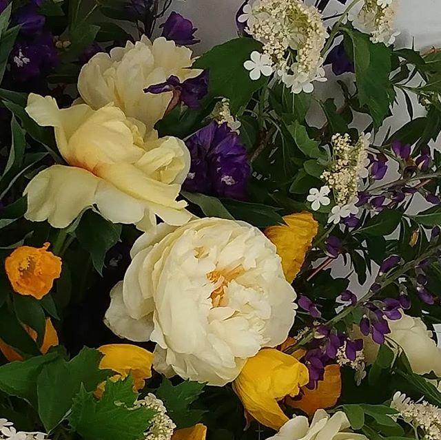 """Peonies like frosting, and more than 6"""" across.  YUM. . . #peonies #spring #frosting #slowflowers #seatteflorist #laughinggirl #laughinggirlflowers"""