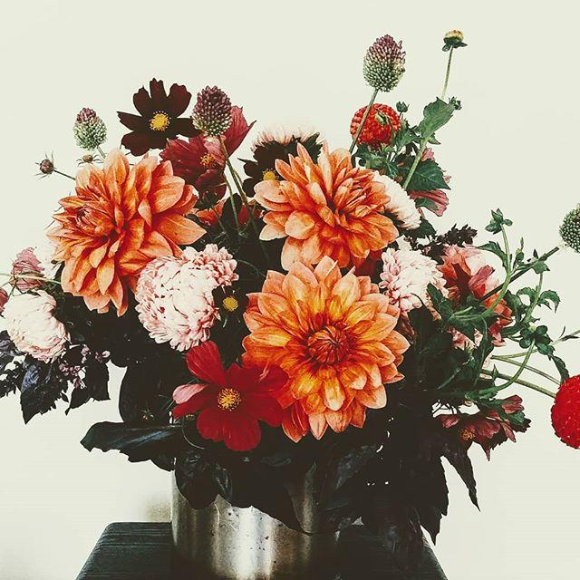 Feeling a bit like fall today isn't it? I'm not sure I'm ready... . . . #seattleflorist #seattlefloraldesigner #seattleweddings #seattleweddingflowers #dahlias #mums #cosmos #seattlesummer #slowflowers #slowliving #swgm #laughinggirl #laughinggirlflowers