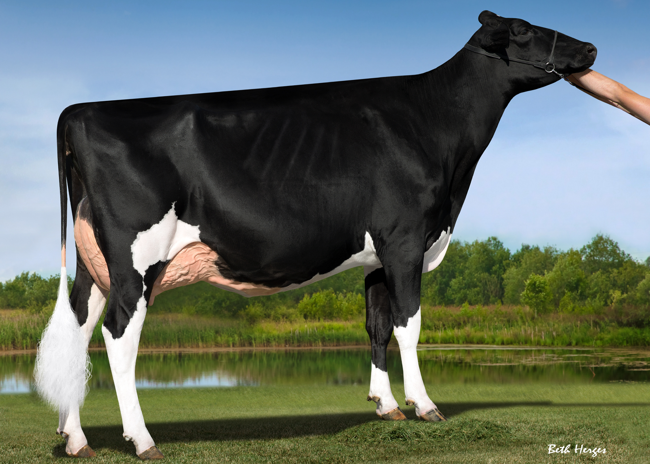 BUTLERVIEW DOOR CAMILLA VG89-2YRS