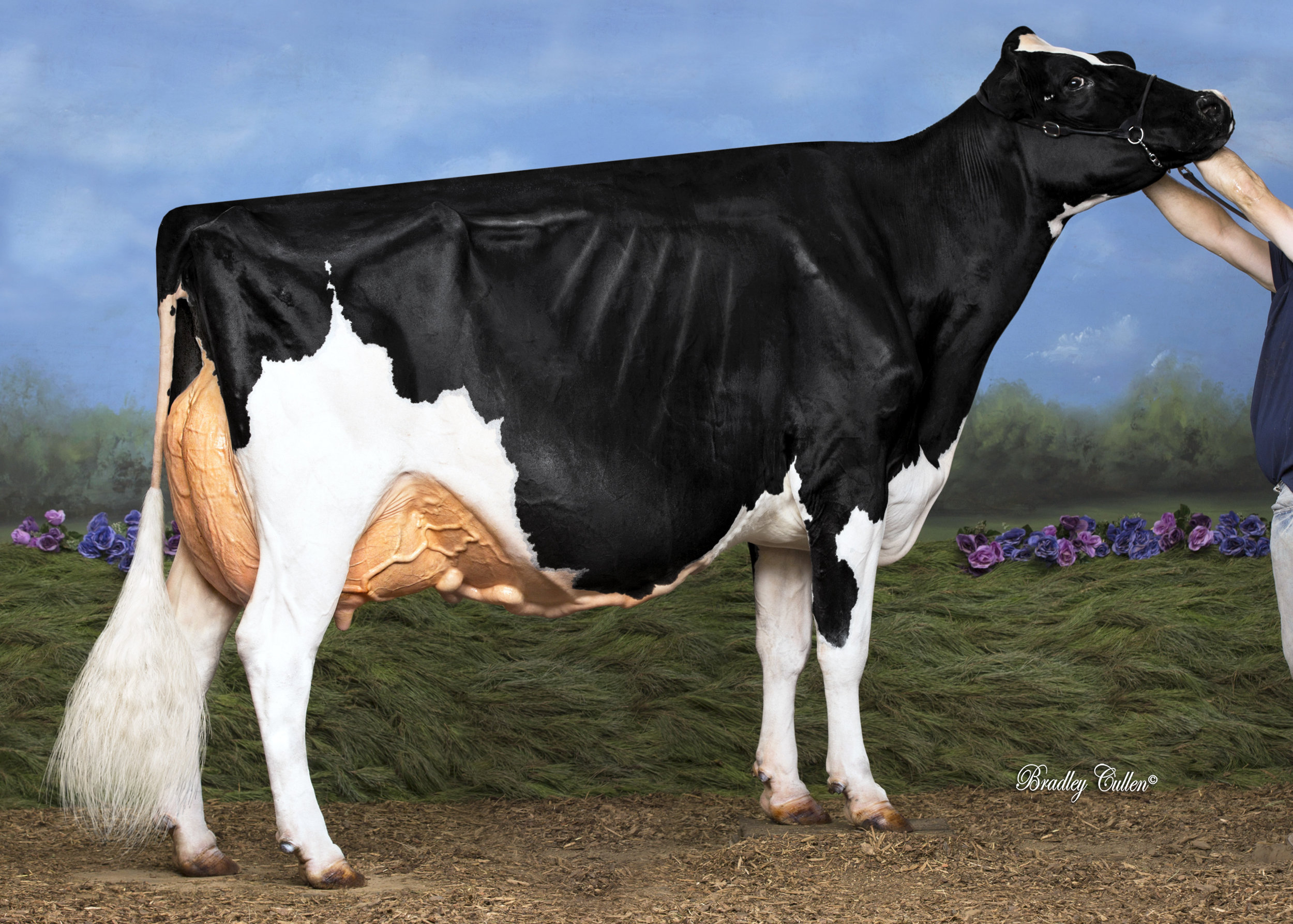 WINDY VALE CONTENDER ROSE EX-94
