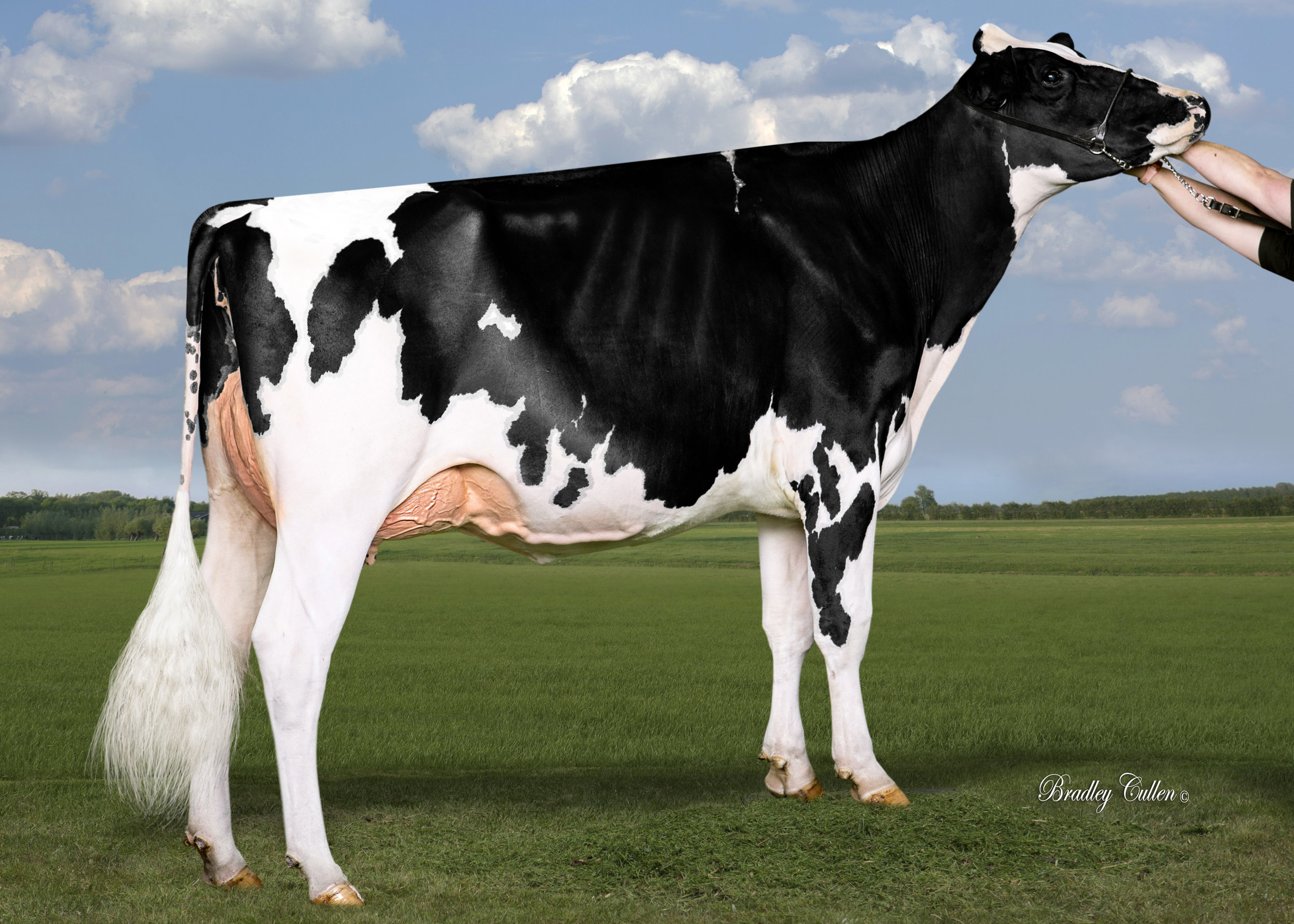 ECLIPSE OCTANE PRINCESS VG88-2YRS (MAX)