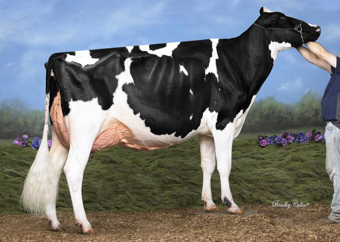 ECLIPSE ATWOOD PRINCESS 8 VG88