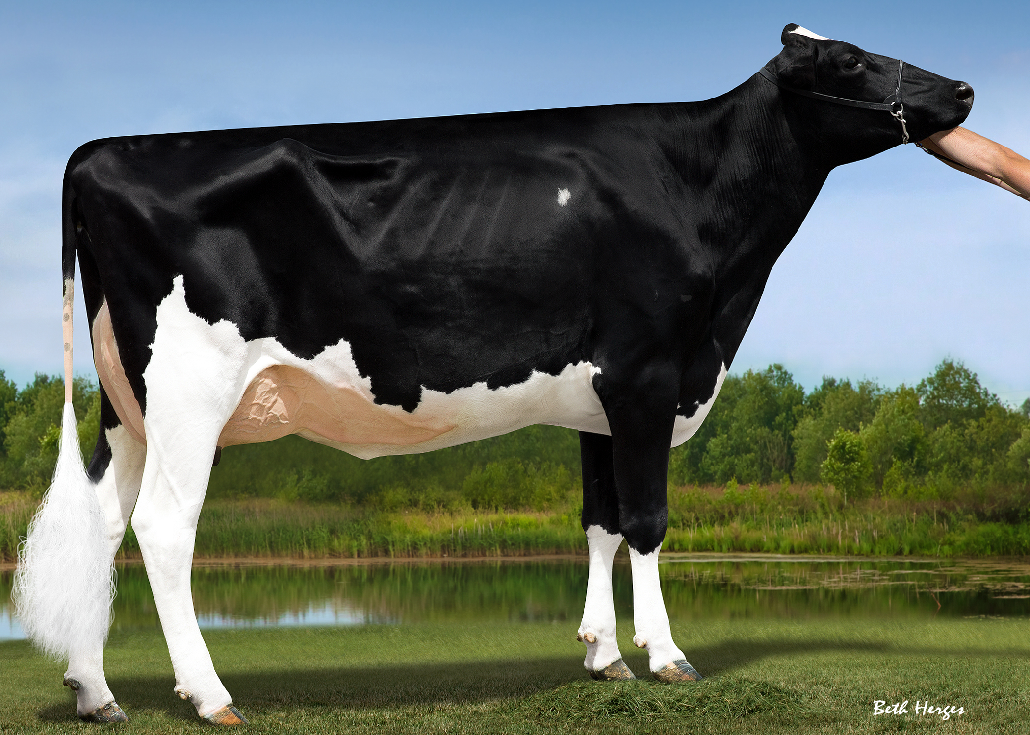MS ARIANNAS DOOR ARMANI VG85