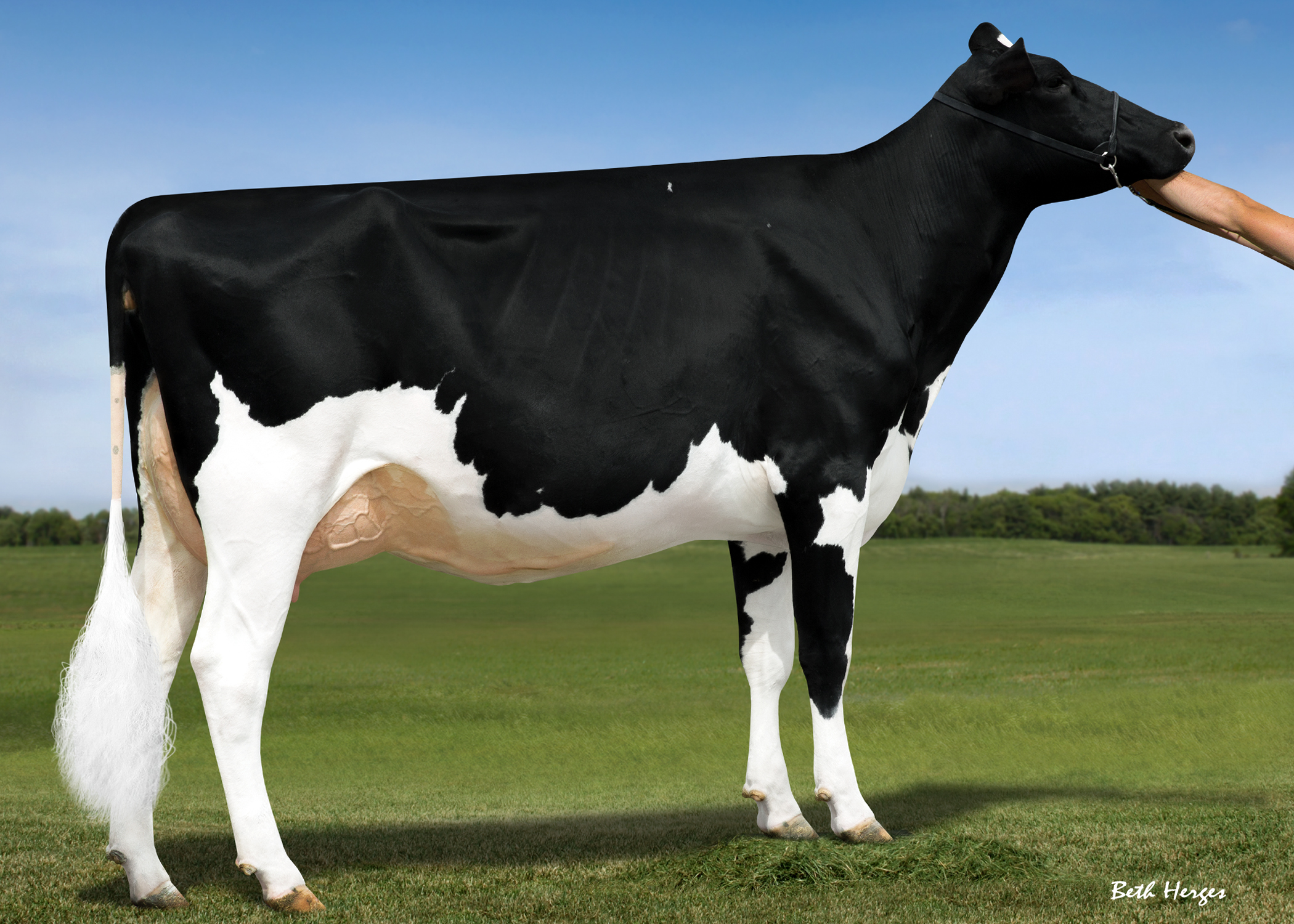 MS DOORMAN LIVELY VG86-2YRS
