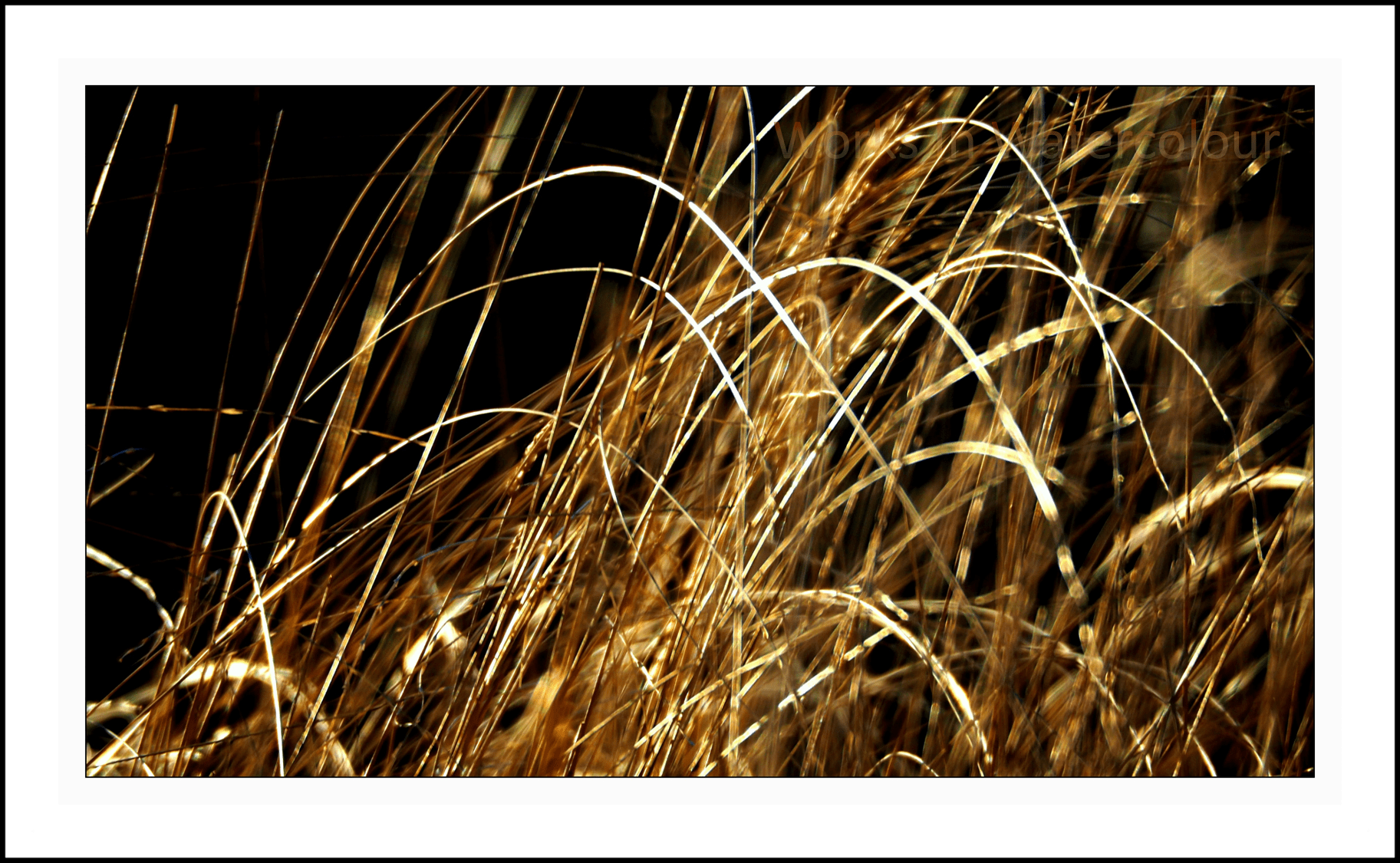 Golden Grass (c) WIW - Russell Perry