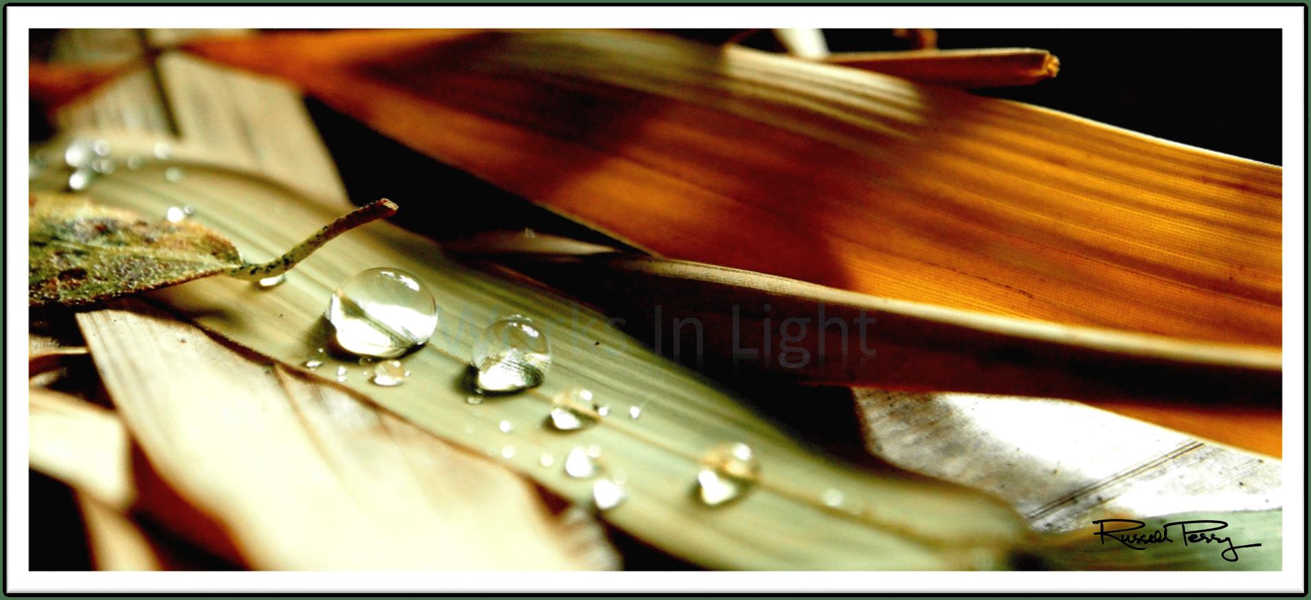 Dew Pearls-min.png