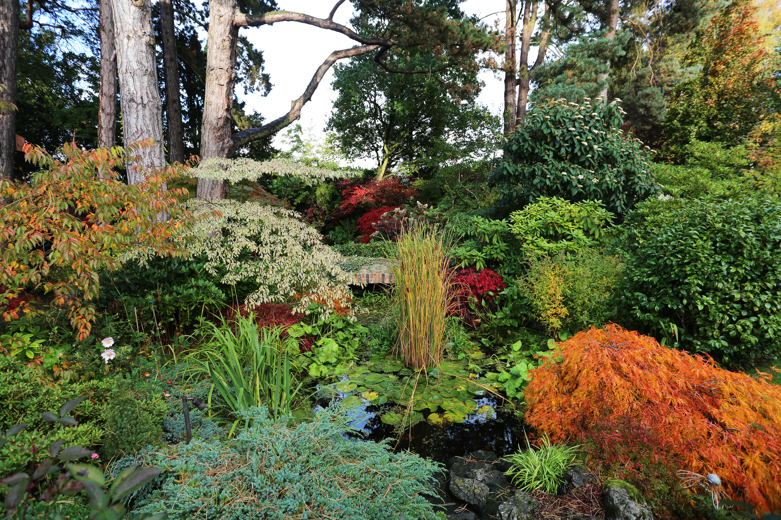 garden_pond.png