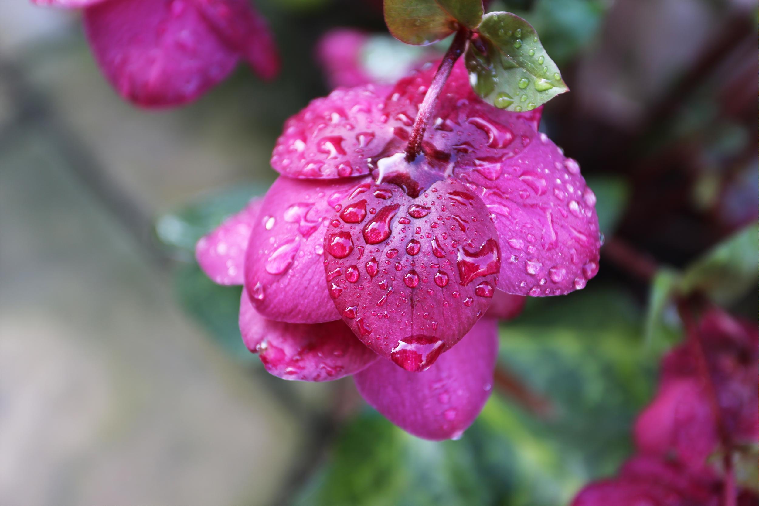 flower_raindrop.png