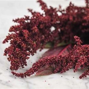 Amaranth Hopi Red Dye