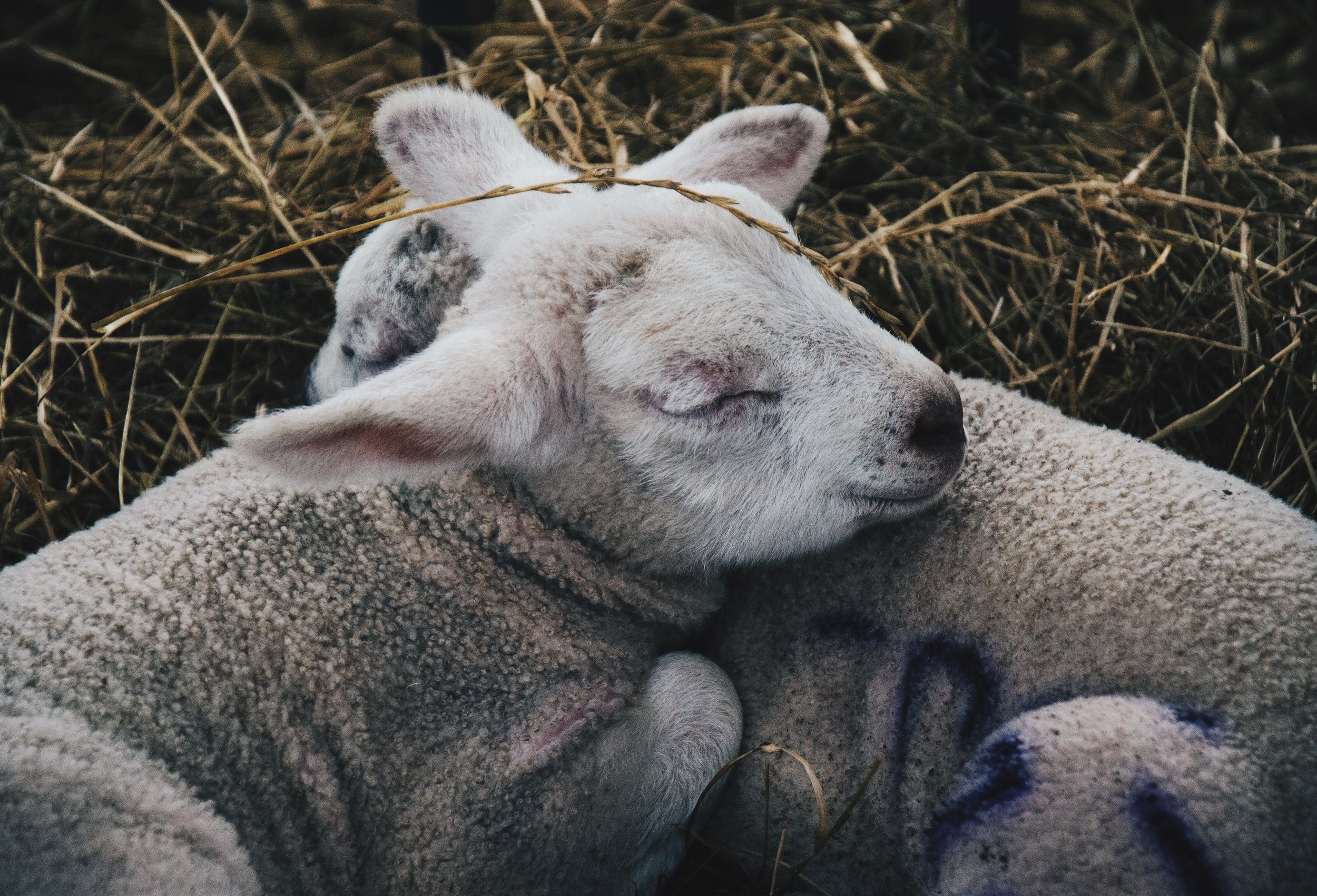 Ga lekker vroeg dutten om genoeg slaap te pakken in de drukke toetsweek