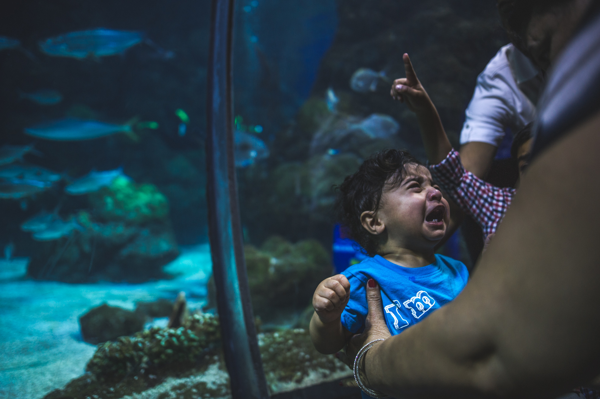 Little boy crying in front of a fish tank at the Denver Aquarium while a little boy behind him points up