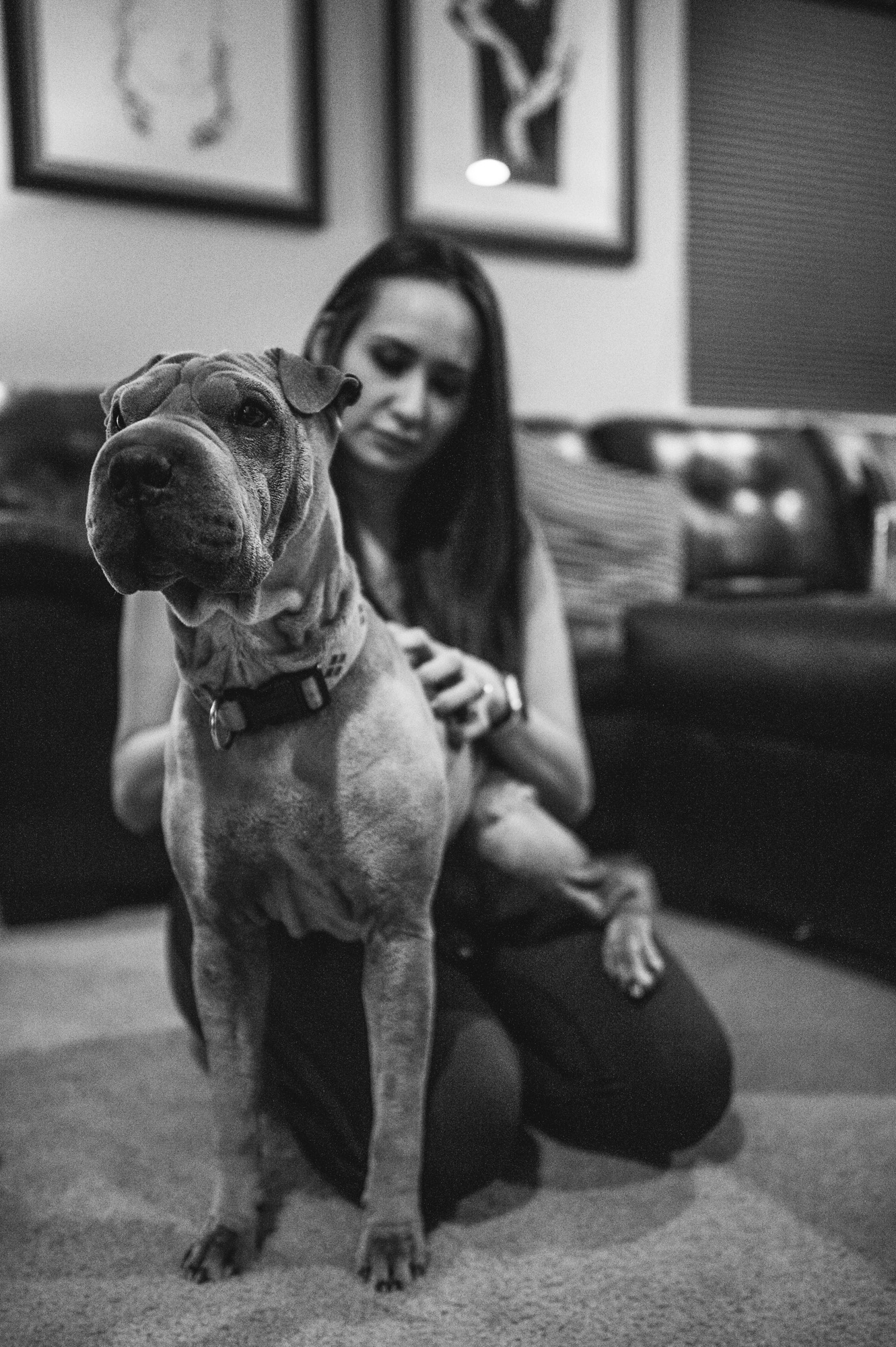 Large dog stares off as he sits in a woman's lap on the floor, black and white, Stapleton, Colorado