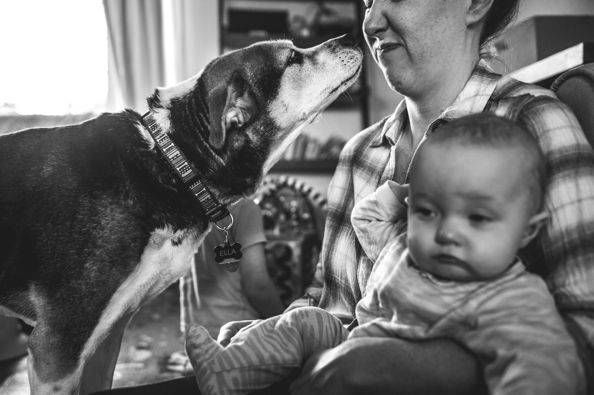 A woman sits on the floor holding her infant daughter while her dog tries to sniff the woman's face and the woman moves away and makes a disgusted face, black and white, Denver, Colorado