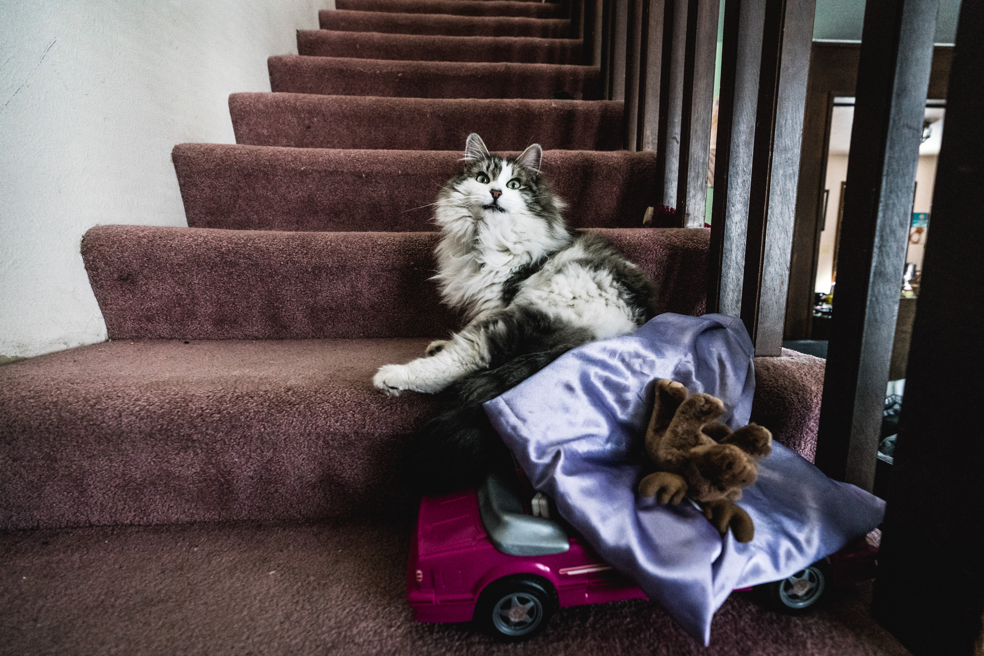 A big fluffy cat on the steps of a home looks at the camera