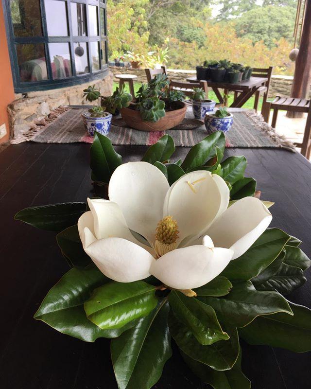 Las razones que nos acercan a la naturaleza #magnolia #chocolates #Galipán #cacaovenezolano #duendes